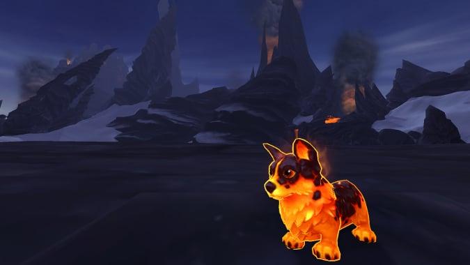 molten corgi new pet battle