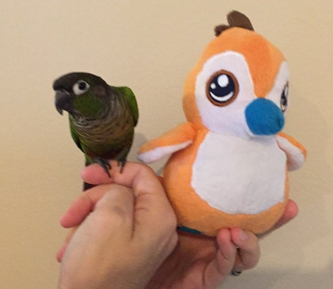 blizzcrafts pepe and parrot