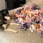 Dogs vs. a pile of 90 Murlocs