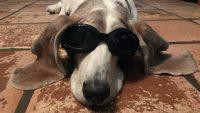 The Queue: Dog