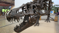 Why I'm sad to see Stan, the famous T-Rex specimen, sell to a private collector for $31.8 million